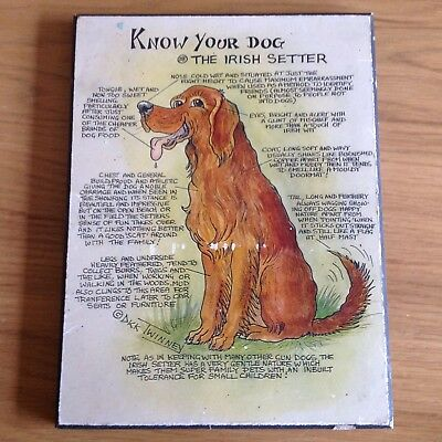KNOW YOUR DOG - The Irish Setter - Canine Cartoon Picture Plaque by Dick Twinney
