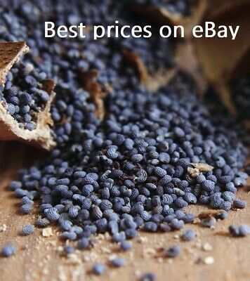 5 Pounds of UK English Blue Poppy Seeds Organic And All Natural