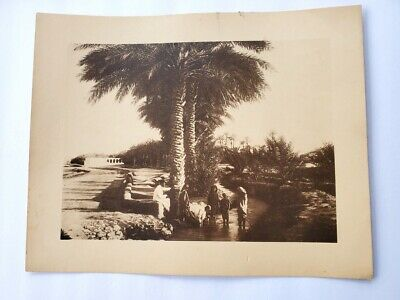Vintage Photogravure of North Africa Oasis