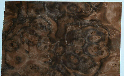 Walnut Burl Raw Wood Veneer Sheets 7.5 x 14 inches 1/42nd thick        8631-6