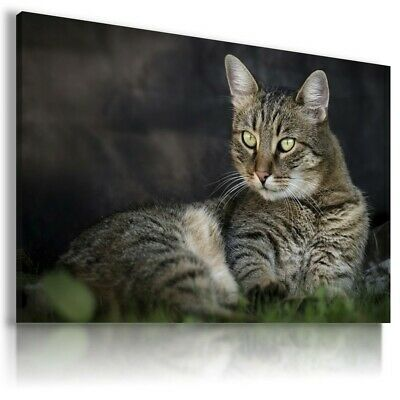 LOVELY CAT Animals Canvas Wall Art Picture Large AN22  NO FRAME  MATAGA .