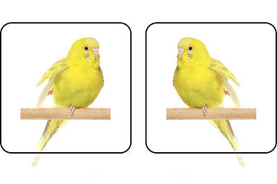 20 Yellow Budgie Bird stickers for showcases 50mm x 50mm (10 left & 10 right)
