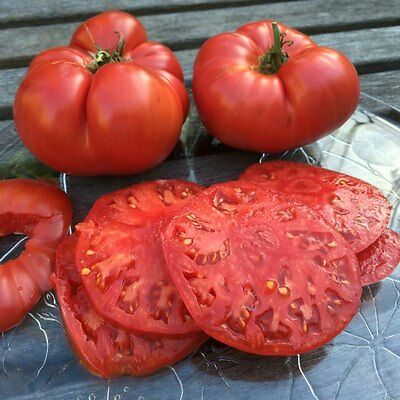 Tomato BEEFSTEAK RED  25 Heirloom, Non-gmo Seed   FREE Shipping