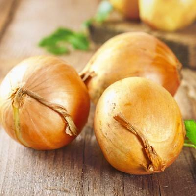 Onion Large Spanish Sweet - Appx 1000 seeds