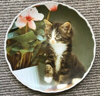 "ROYAL ALBERT porcelain collectors plate-CUTE KITTENS-""SOCKS""-1994"