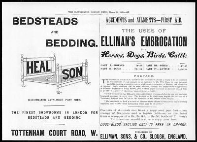 1899 Antique Print - ADVERTISING Ellimans Embrocation Heal and Son (111)