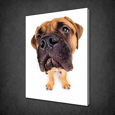 Bullmastiff Puppy Dog Animal Canvas Print Picture Wall Art Ready To Hang