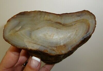 Dino: Banded Agate, Brazil - 1 lb. 7.8oz. - Lapidary Rough