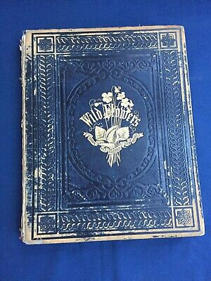 """Illustrated """"Wild Flowers"""" by Mrs Badger 22 Hand Colored Lithographs 1859 1st Ed"""