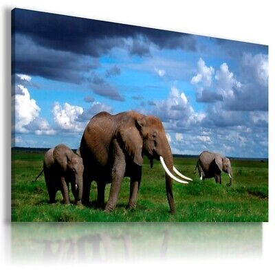 AFRICA ELEPHANTS SUNSET 3D Window Canvas Wall Art Picture W364 UNFRAMED MATAGA .