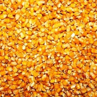 (GBP 0,69/kg) 10kg Corn, Food for Poultry Poultry Ducks Geese Pigeons Pig