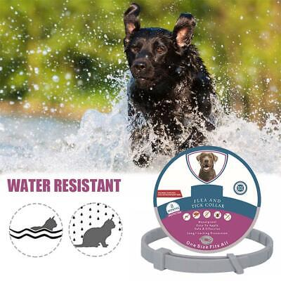 Pet Collar w/ Natural Plant Extract Waterproof Flea And Tick Collar For Cat Dog