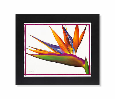 Bird Of Paradise Floral Flower Arrangement Wall Picture Black Framed
