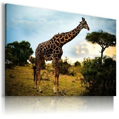 GIRAFFE Domestic And Wild Animals Canvas Wall Art Picture Large AN114 UNFRAMED