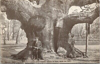 1500 Years Old Oak Tree Man Sitting Unknown Location UNUSED Postcard E51