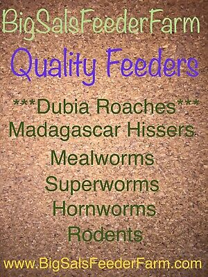 Live Large Mealworms Cupped