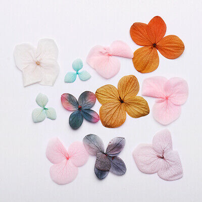 Real Dried Dry Flowers 3D Nail Art Decoration Hydrangea Floarl Design DIY Tips