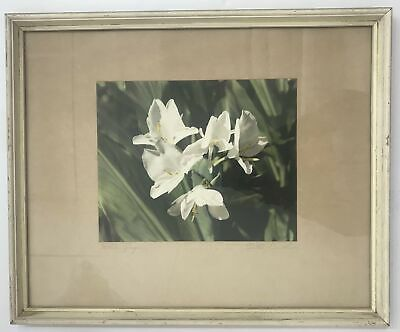1940's Vintage Hand Colored Photograph By Edithe Beutler 'White Ginger'