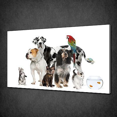 Pets Collection Dog Cat Parrot Fish Canvas Print Wall Art Picture Ready To Hang