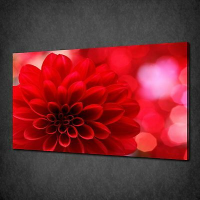 Modern Red Dahlia Flower Canvas Wall Art Print Picture Ready To Hang