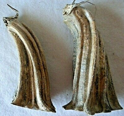 """2 X Large Jumbo Pumpkin Stem 3"""" by 6"""" Heat Treated, Clean, Ready to Use P 17"""