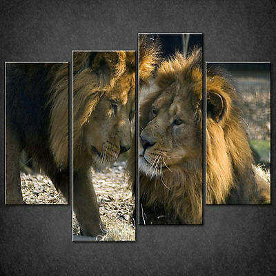 Wild Cats Two Male Lions Cascade Canvas Wall Art Print Picture Ready To Hang