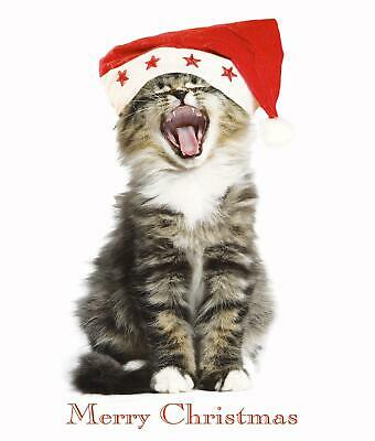 Kitty Chorus Funny Cat Glitter Greeting Card Christmas Cards Humorous Greetings