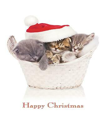 Basket of Joy Funny Cat Glitter Greeting Card Christmas Cards Humorous Greetings