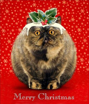 Cat's Pudding Funny Cat Glitter Greeting Card Christmas Cards Humorous Greetings
