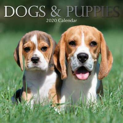 Dogs & Puppies - Wall Calendar 2020