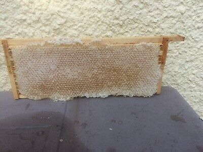 Whole Frame Of Comb Honey Straight From The Beehive