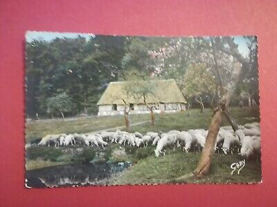 Cpa Ancienne - Normandie - Moutons Au Pacage - 1957