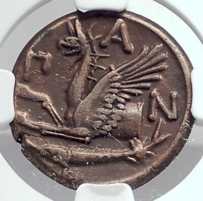 PANTIKAPAION BOSPORUS 310BC RARE R1 Ancient Greek Coin PAN & GRIFFIN NGC i80122