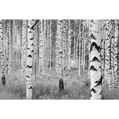 Wall Mural Birch Forest Nature Theme, Non-Woven with 4-Panels, 98 in. x 145 in.