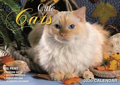 Cute Cats - 2020 Rectangle Wall Calendar 16 Months by Bartel (B)
