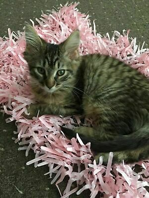 PINK Tissue Paper Grass Mat for cat or kitten toy FAST DELIVERY pet toys.