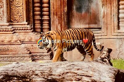 🌺 Digital Picture Image Photo Wallpaper Desktop Screesaver Beautiful Tiger (N2)