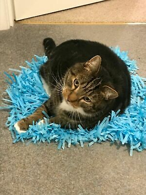 BLUE Tissue Paper Grass Mat for cat or kitten toy FAST DELIVERY pet toys.