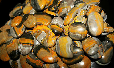 Wholesale Lot 250.00 Ct Natural Bumble Bee Jasper Multi Cabochon Loose Gemstone