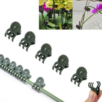 20/30/40Pcs Plant Support Daisy Garden Orchid Clips Vines Grow Upright Clip ~GN