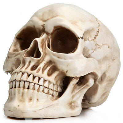 Life Size Realistic Human Skull Head Bone Model 1:1 Resin for Educational Tools