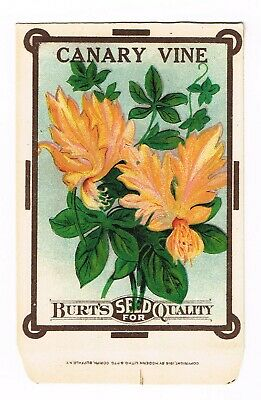 VINTAGE SEED PACKET FLOWERS ADVERTISING C1910 GENERAL STORE GARDEN CANDY TUFT