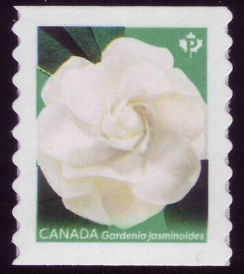 "CANADA 2019 Gardenia, coil single, #3168 ""P"" Cape jasmine with green back MNH"