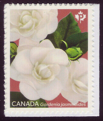 "CANADA 2019 Gardenia, booklet single #3169 ""P"" Cape jasmine, red background MNH"