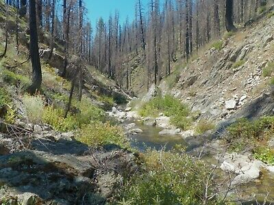 Chunky Gold California Motherlode Mining Claim Secret Canyon 20 Acres, Rich, NR!
