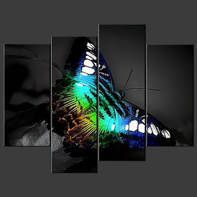 Rainbow Butterfly Cascade Canvas Print Picture Ready To Hang