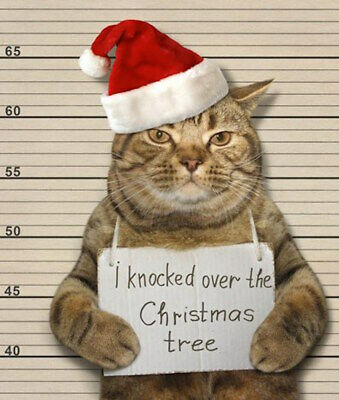 Moggie Mugshot Funny Naughty Cat Glitter Greeting Card Christmas Cards Humorous