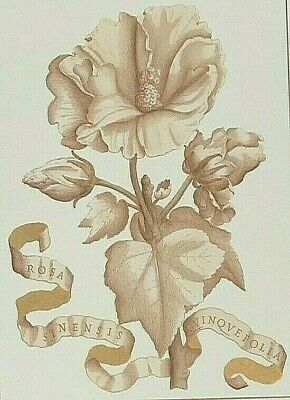 Antique Print-BOTANICAL PLANT -PLATE Lizars-1800'S HEAVY PAPER-LARGE 19X14     W