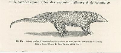 Antique Hedgehog Mother Baby Kingdom Of Siam Small Miniature Art Old Print