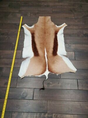 """approx 39/""""X22/"""" Natural XX Large African SPRINGBOK Skins African antelope hides"""